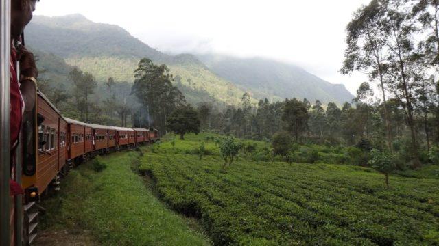 スリランカヌワラエリヤ高原列車と紅茶畑